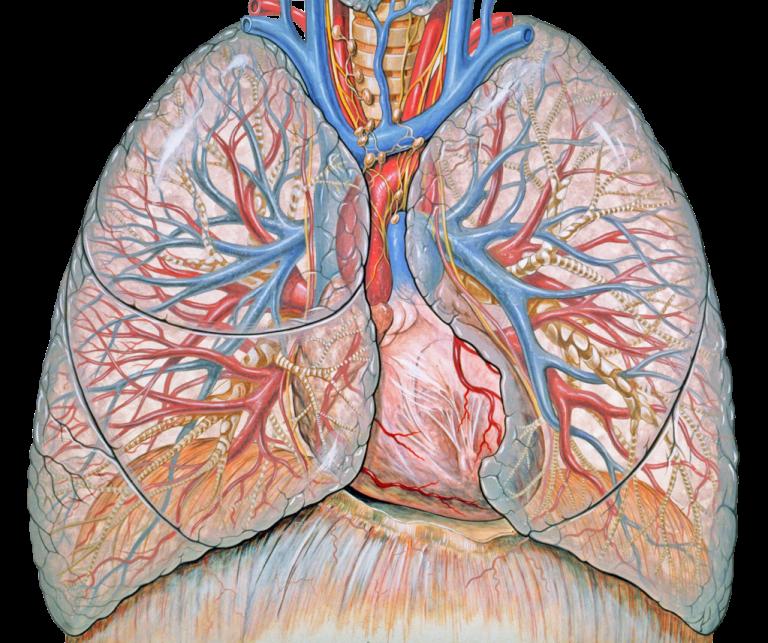 """肺与呼吸""""/> </div><div class="""